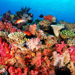 Mixed Corals on a small bommie
