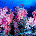 Soft Coral Display